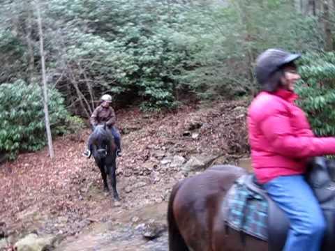 Horseback  Riding in Appalachian Mountains!