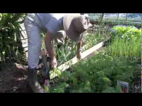 菜園だより131028収穫・葱板枠・脱粒・剪定
