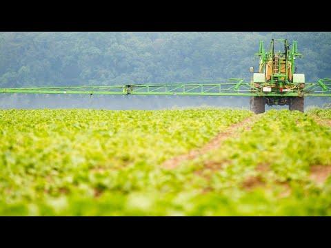 Glyphosat-Ende: Bis 2023 soll das Pflanzengift Glyphosat verboten werden