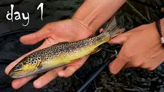 "Summer fishing for wild trout with dry flies: even though the trout are small, I love this style of fishing! On this day, I fished to upper Manistee river and the ""holy waters"" stretch of the Au Sable River. Managed to get a few brook and brown trout to rise to size 14 Royal Trude and Elk Hair Caddis dry fly patterns, despite no real hatches. The video for day 2 will include some larger catches, Be sure to stay tuned for that! Thanks for watching!-Subscribe to follow my life through fishing!-Follow me on Instagram @fish.fray for bonus pics and edits-Want to talk fishing? (or anything really idc) Snapchat: @fish.frayRod: Redington Classic Trout 3 wt.Reel. Allen Trout IILine: Rio InTouch Trout LtTippet: 5xMusic: https://soundcloud.com/koresma/folds"