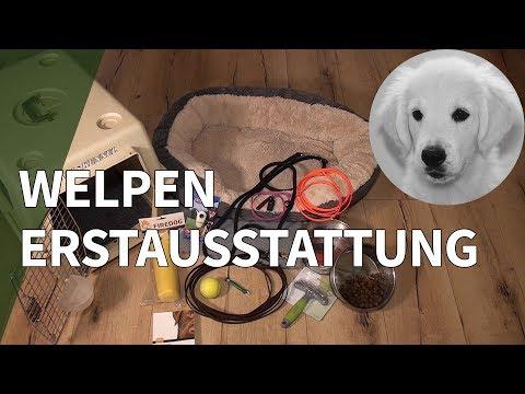 Welpen Erstausstattung: Empfehlung für Welpen Zubehör ...