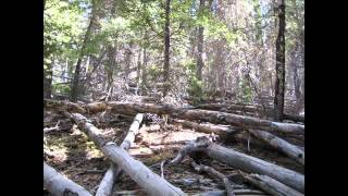 FYI - This is not a short video. You have been warned. :)This video captures a large amount of my 50 km adventure at the Jemez Trail Run in 2011. I ran this with a good friend that was attempting his first ultra...and first marathon of any type. The beauty, the challenge, Jemez had it all.Great, great race!For more trail/ultra running fun, check out endurancebuzzz.com
