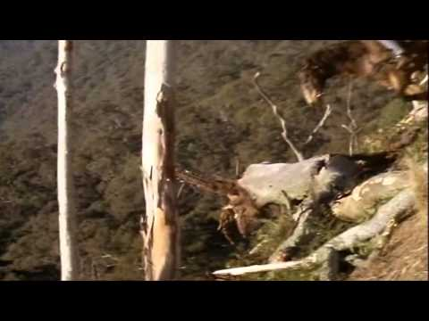 Return To Snowy River-The Descent (HD Quality)