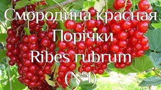 Поричка (№1)