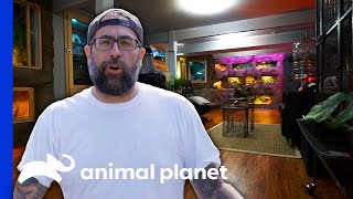 Building The Perfect Cave For 22 Animals In A Basement | Animal Cribs by Animal Planet