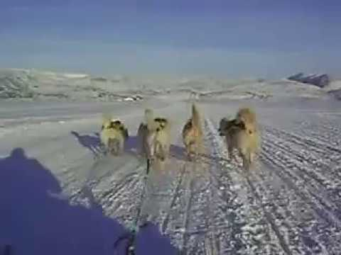 Riding with huskies in Greenland