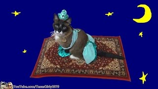 Cat Riding Magic Flying Carpet.