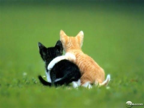 Frases de amizade - Frases curtas de Amizade, imagens Com frase de amizade, frases evangelicas de Amizade