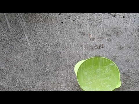 Raining Cats And Dogs War Water