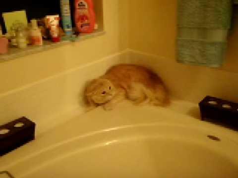 Questo gatto NON vuole uscire dal bagno !