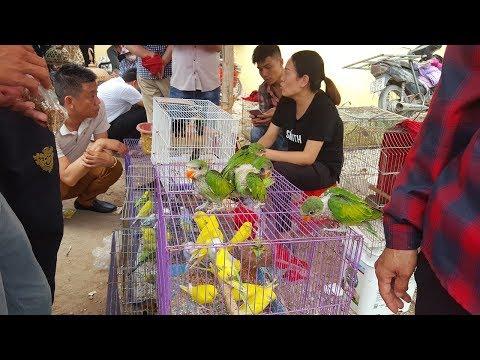Sự thật thú vị về phiên chợ bán chim cảnh độc đáo