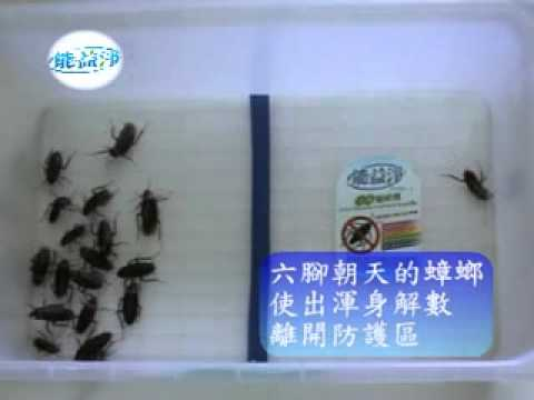 防蟑螂入侵實驗影片! 超神奇