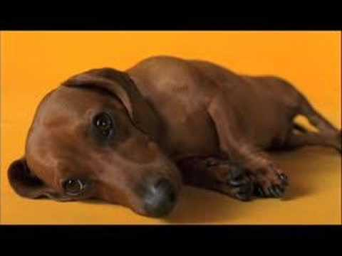 Pedigree Commercial - Rub My Belly