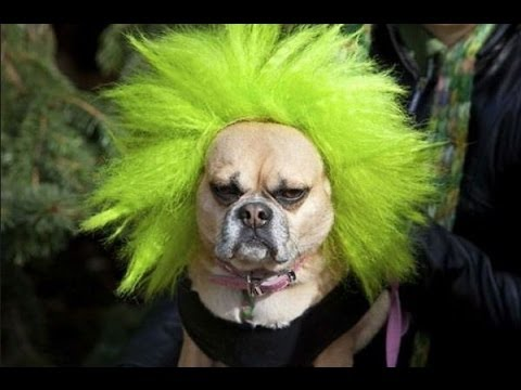 Funny Crazy Dogs Compilation