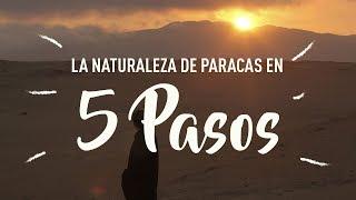 Paracas Peru  city photos : Buen Viaje a Paracas - 5 pasos para conocer la Reserva Nacional del Peru