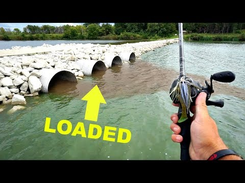Video AMAZING Bass Fishing Drainage Tubes after a Storm!!! (He's Back) download in MP3, 3GP, MP4, WEBM, AVI, FLV January 2017