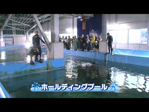 【高知・大阪】巨大ジンベイザメのお引越しを任された男たちの熱きドラマ!