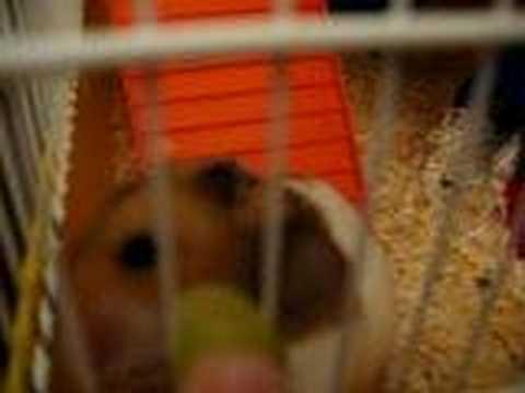 Kuriboh eating a grape