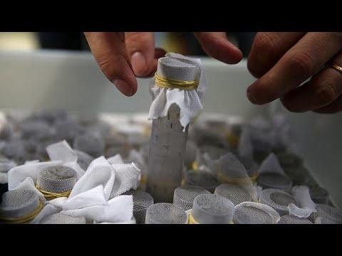 Βραζιλία: Κουνούπια στη μάχη κατά του δάγκειου πυρετού