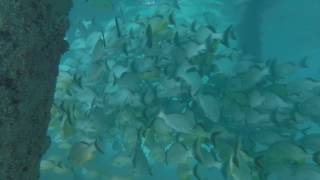 Download Lagu Snorkeling in Riviera Maya - Barcelo Resort Mp3