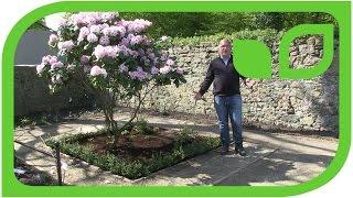 Paradiesgärtlein mit Rhododendron