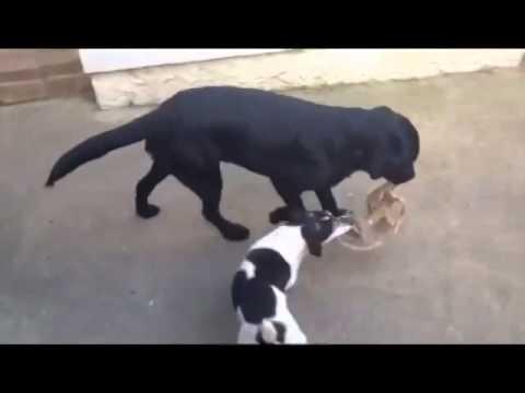 #PetsWithPawsonality - Eddie & Sid