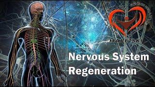 Nervous System Regeneration. Aliaksandr Haretski.