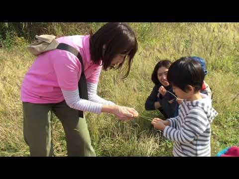 和光鶴川幼稚園2歳児親子教室はらっぱ「秋を見つけに野津田公園へ」