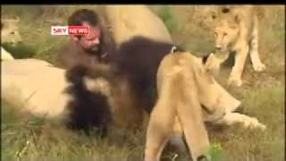 Guy plays with lions...this is not so unusal people!