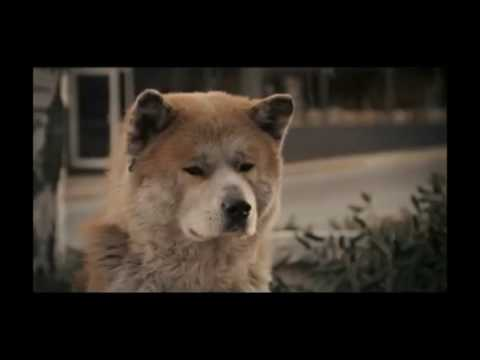 Hachi, based on a true story