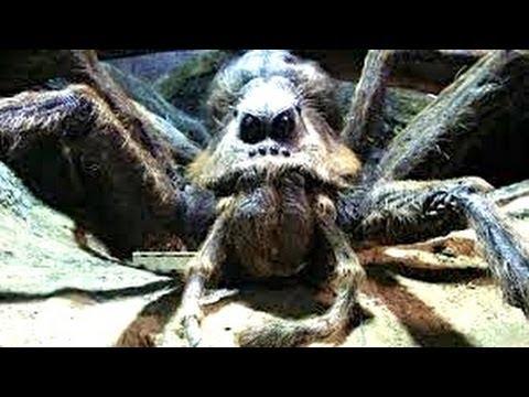 當蜘蛛爬在身上該如何處理?