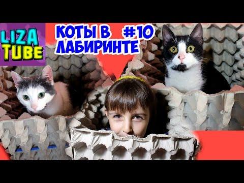 Лабиринт #10 для кошек 😺 Новая полоса препятствий 😂  Два кота проходят лабиринт 🌸 LizaTube (видео)