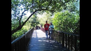 Gazebo Wisata Mangrove Wonorejo-Surabaya