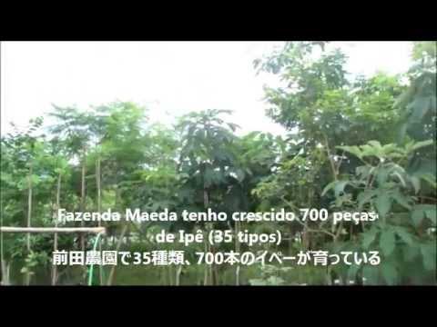 Intercâmbio Japão-Brasil em Ipê:イペーによる日伯交流