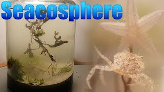 Video Huge Natural Saltwater Ecosphere - Starfish, crabs and a lot more... MP3, 3GP, MP4, WEBM, AVI, FLV Agustus 2019