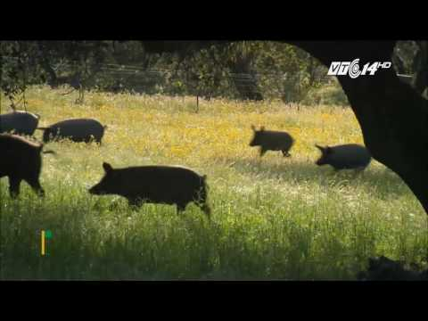 (VTC14)_Món thịt lợn đắt nhất thế giới của Tây Ban Nha được làm như thế nào?