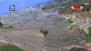 Yuanyang China  city photos : Stunning rice terraces in Yuanyang County, south China's Yunnan Province