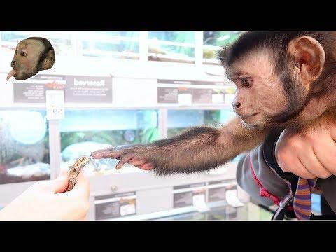 Monkeys Petsmart Adventure! (NEW FRIENDS)