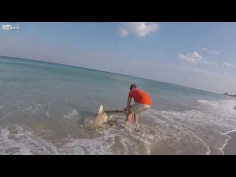 Geretteter Hai