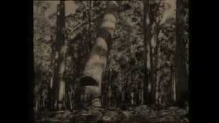 Manjimup Australia  City pictures : 1920 Manjimup Timber Industry.