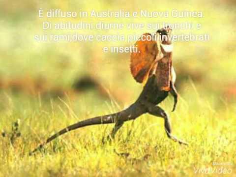 il clamidosauro - ecco cos'è!