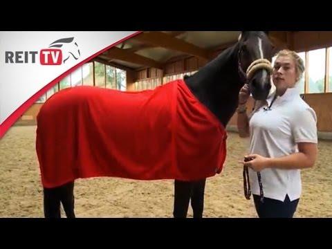 Ausrüstung: Pferdedecken - Worauf muss ich achten?