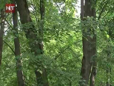 В Кремлевском парке Великого Новгорода проходят плановые работы по благоустройству