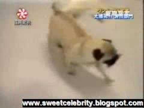 Funny Dog Thief