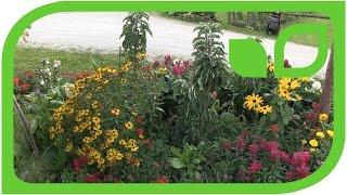 Peters Lubera Hecke in der wunderschönen Dahlien-Gärtnerei