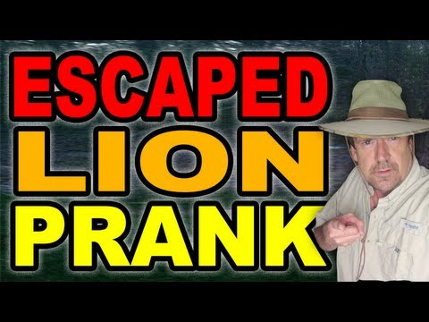 Escaped Lion Prank by Tom Mabe