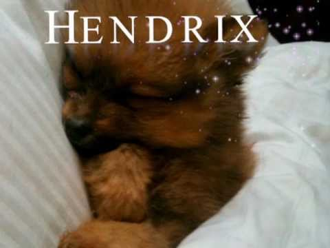Hendrix and The Honeypups