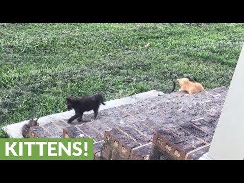 giochi-da-gattini
