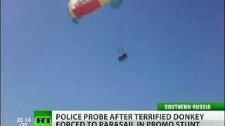 Flying donkey shocks beachgoers in Russia's south