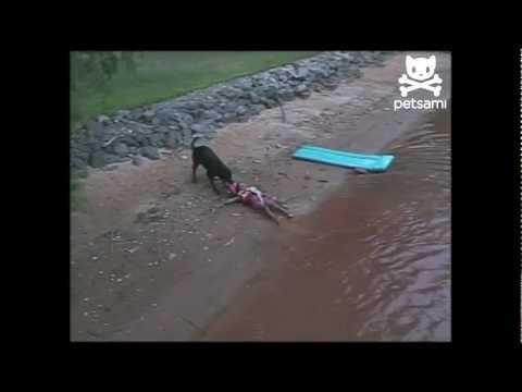 喂!我只是要玩水,別救我啊! 4歲的小主人穿好救生衣要游泳,開開心心往水裡去,卻見大黑狗衝過來,死命